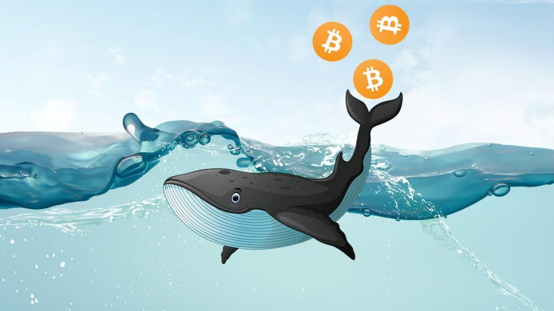 Bitcoin whales offloaded massive amounts of BTC during February - cause Bitcoin to fall? - AZCoin News